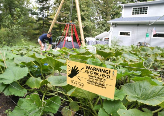 Utilizing an electrified fence to keep wild animals out of his pumpkin patch, Tony Scott covers his giant pumpkins with bed sheets and tarps before the rains start on September 17, 2018.