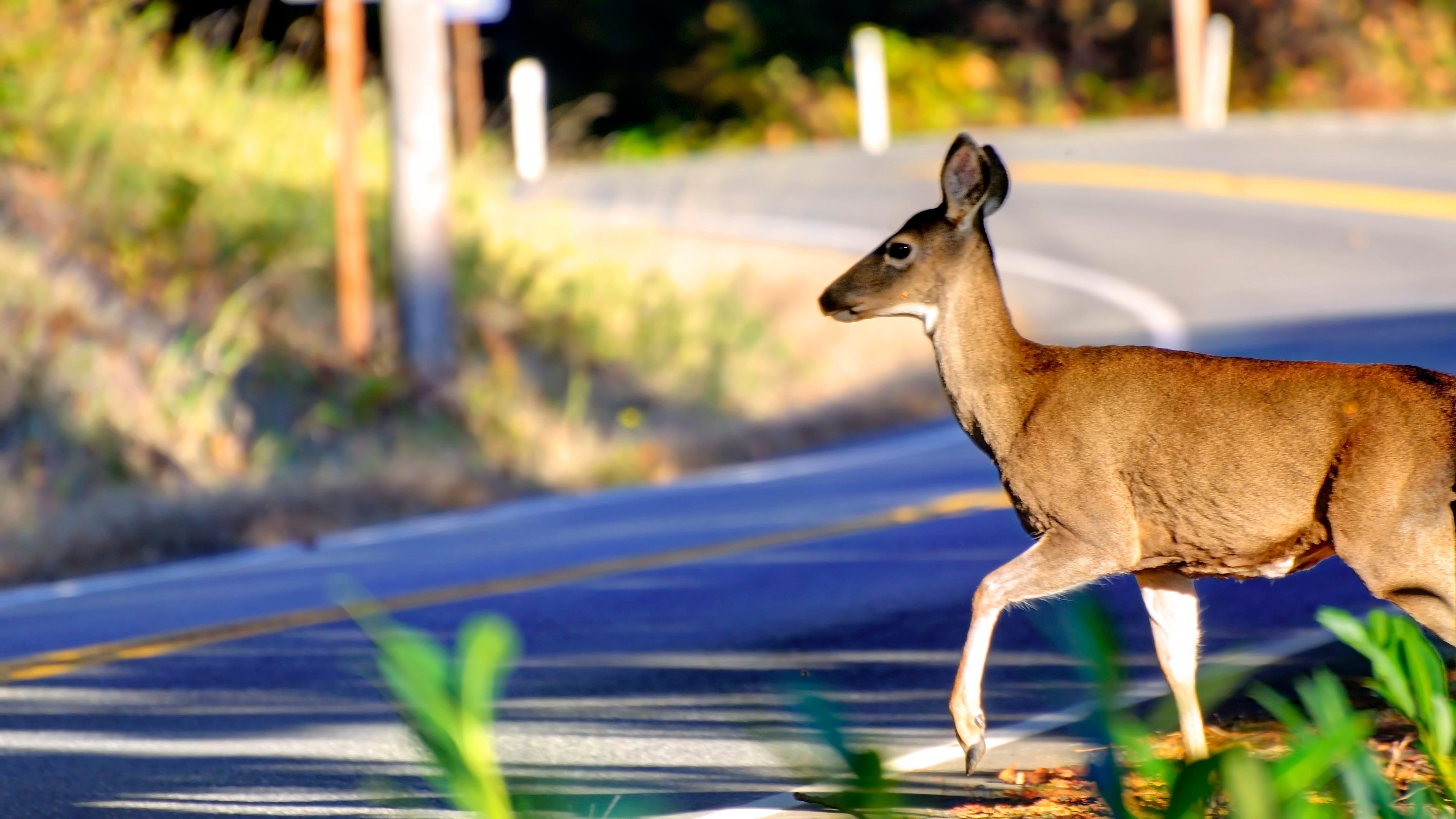 Deer, bear hunting permit deadlines approaching