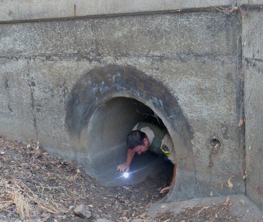 Cody Gamble, an officer with the state  Department of Fish and Wildlife, tried to spot the bear, but it was not visible in the long drain.