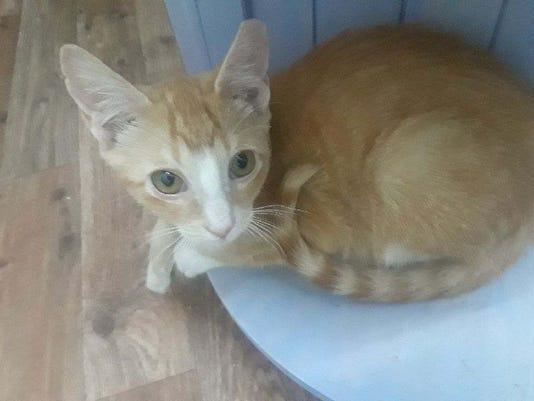 0926 Ynmc Catty Mac