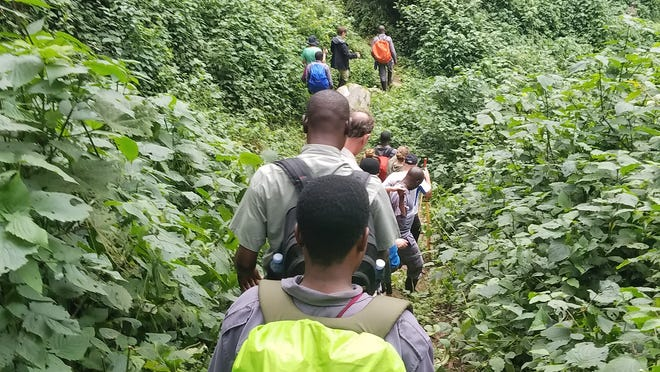 Hikers on an East African safari put on by Wildlife Experience make their way up the Bwindi trail. The creatures and cultures of Uganda will be discussed Tuesday in Camarillo.