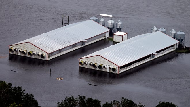 A hog farm is inundated with floodwaters from Hurricane Florence near Trenton, N.C., Sunday, Sept. 16, 2018.