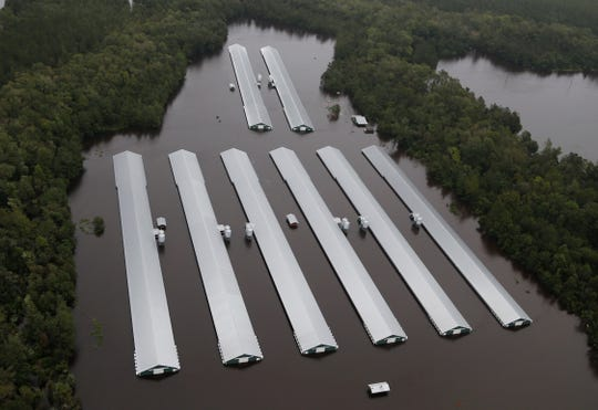 Chicken farm buildings are inundated with flood water from Hurricane Florence near Trenton, N.C., Sunday, Sept. 16, 2018.