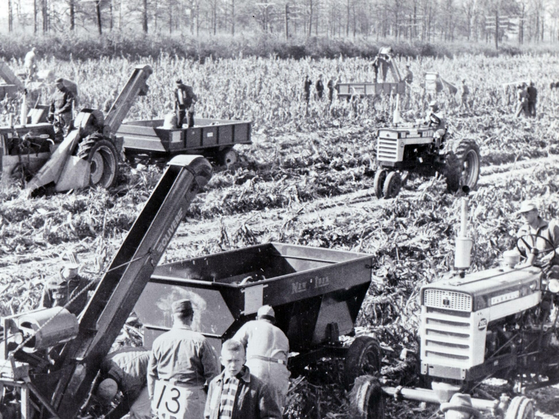 Mechanical corn picking contests were sponsored by corn breeders who worked to create hybrids that would work better for mechanical pickers. Pictured is a 1959 Indiana contest.