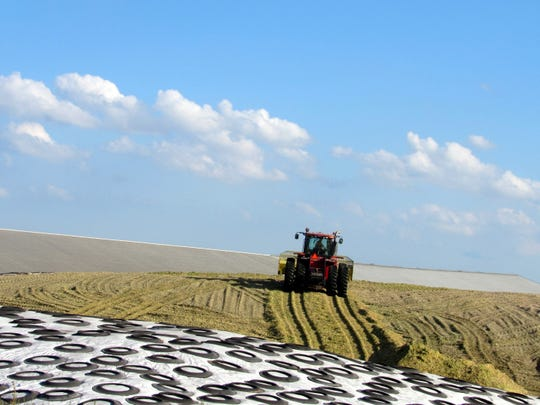 A tractor works on a growing  feed pile of corn silage while a feed pile covered with plastic (to protect is from oxygen and the elements) stands  in the foreground. Tires help to keep the plastic in place until the feed is used later in the year.
