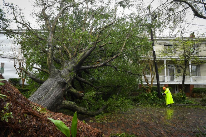 Dan Thompson, a contractor from Florida,  assesses power line damage from a downed tree in Wilmington, N.C. on Sept. 16, 2018.