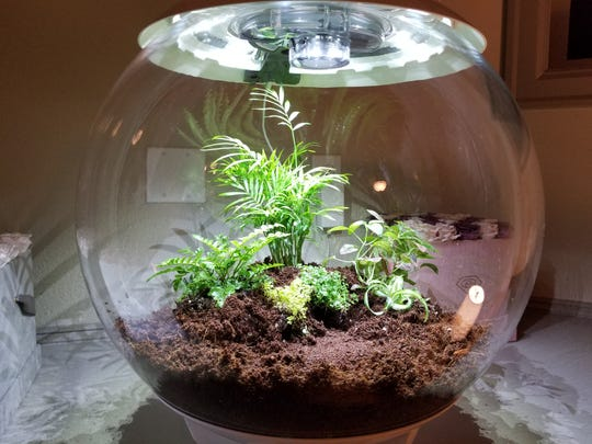 Terrariums bring the outside in.