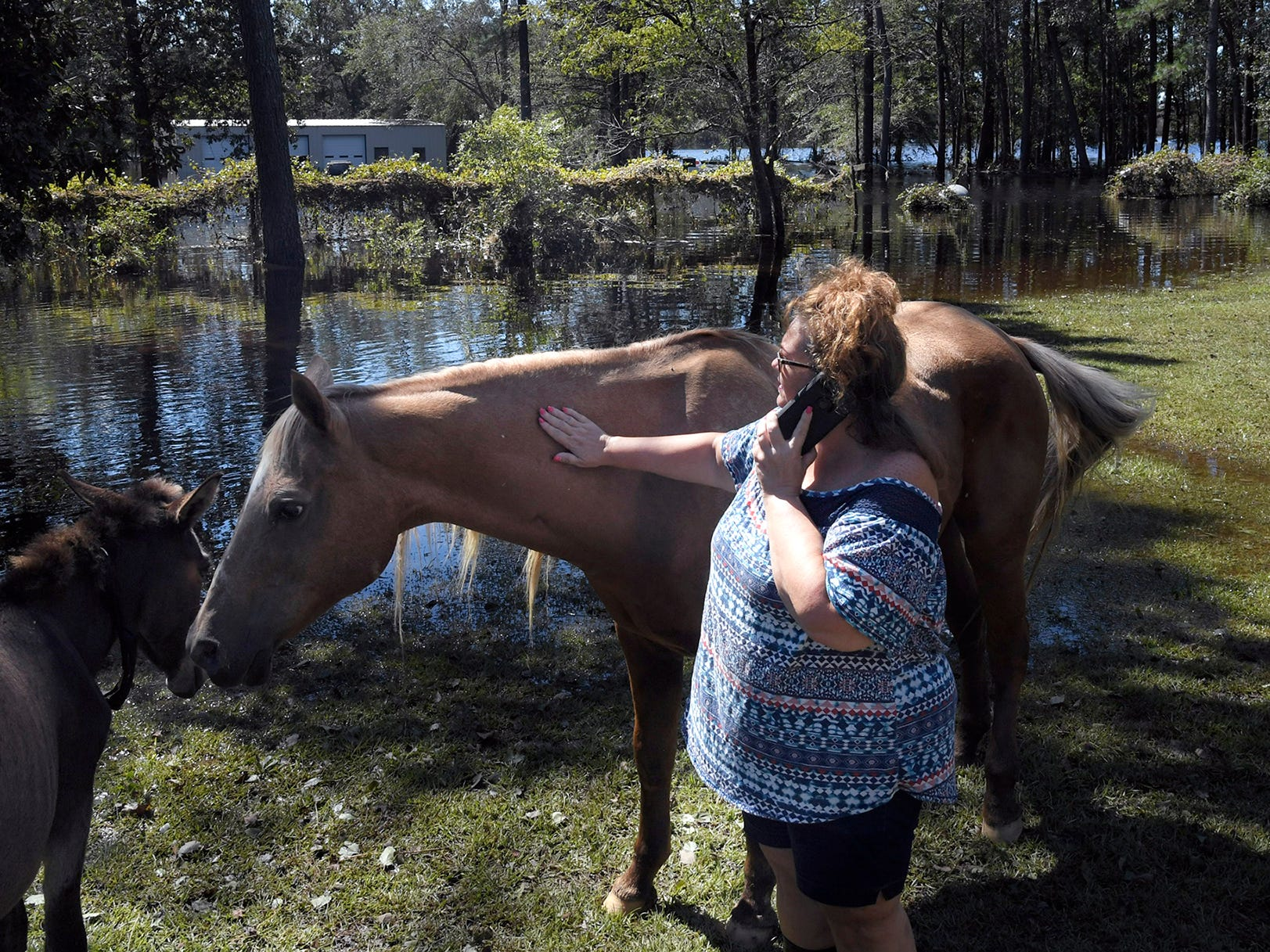 Wendy Rhodes pets her horse and donkey in her flooded backyard at Hallsville, NC home in Duplin County on Tuesday, Sept. 18, 2018.