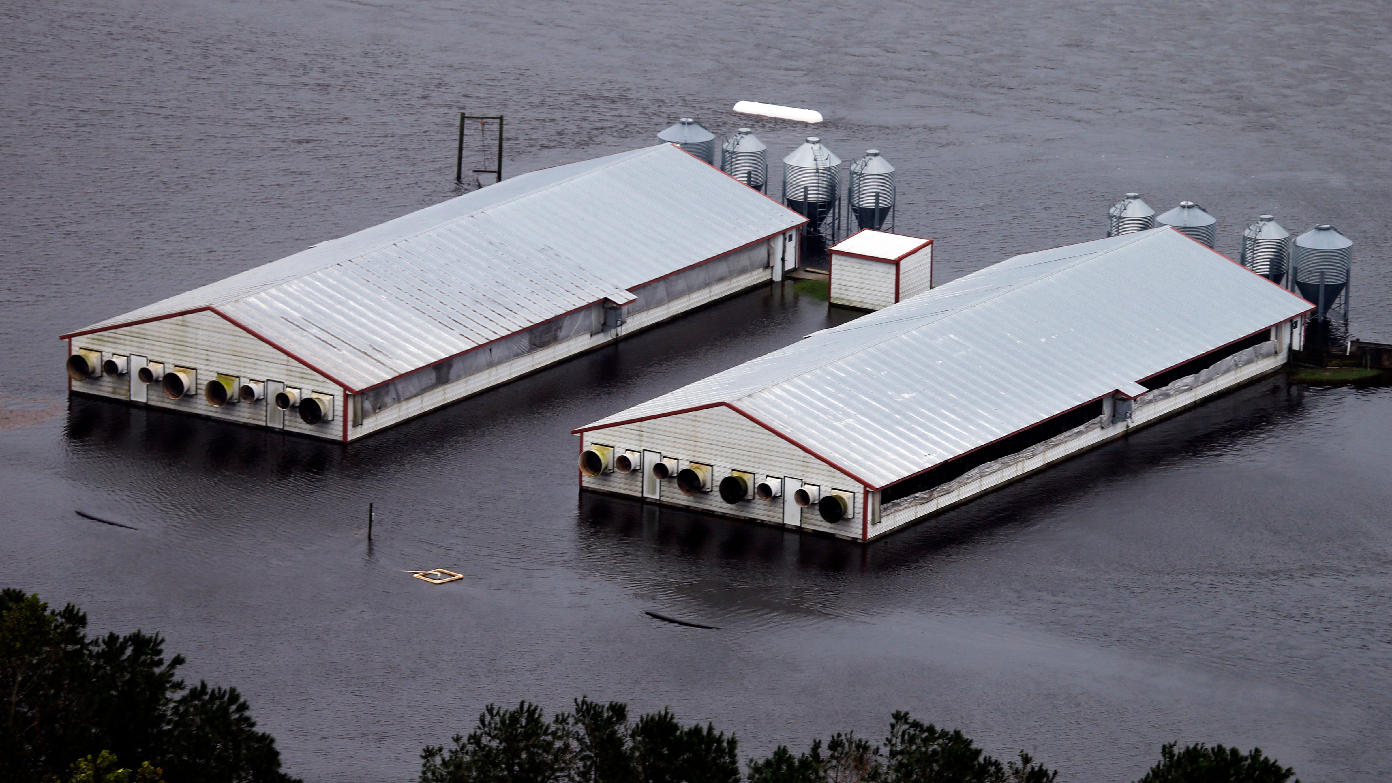 A hog farm is inundated with floodwaters from Hurricane Florence near Trenton, N.C., on Sept. 16, 2018.