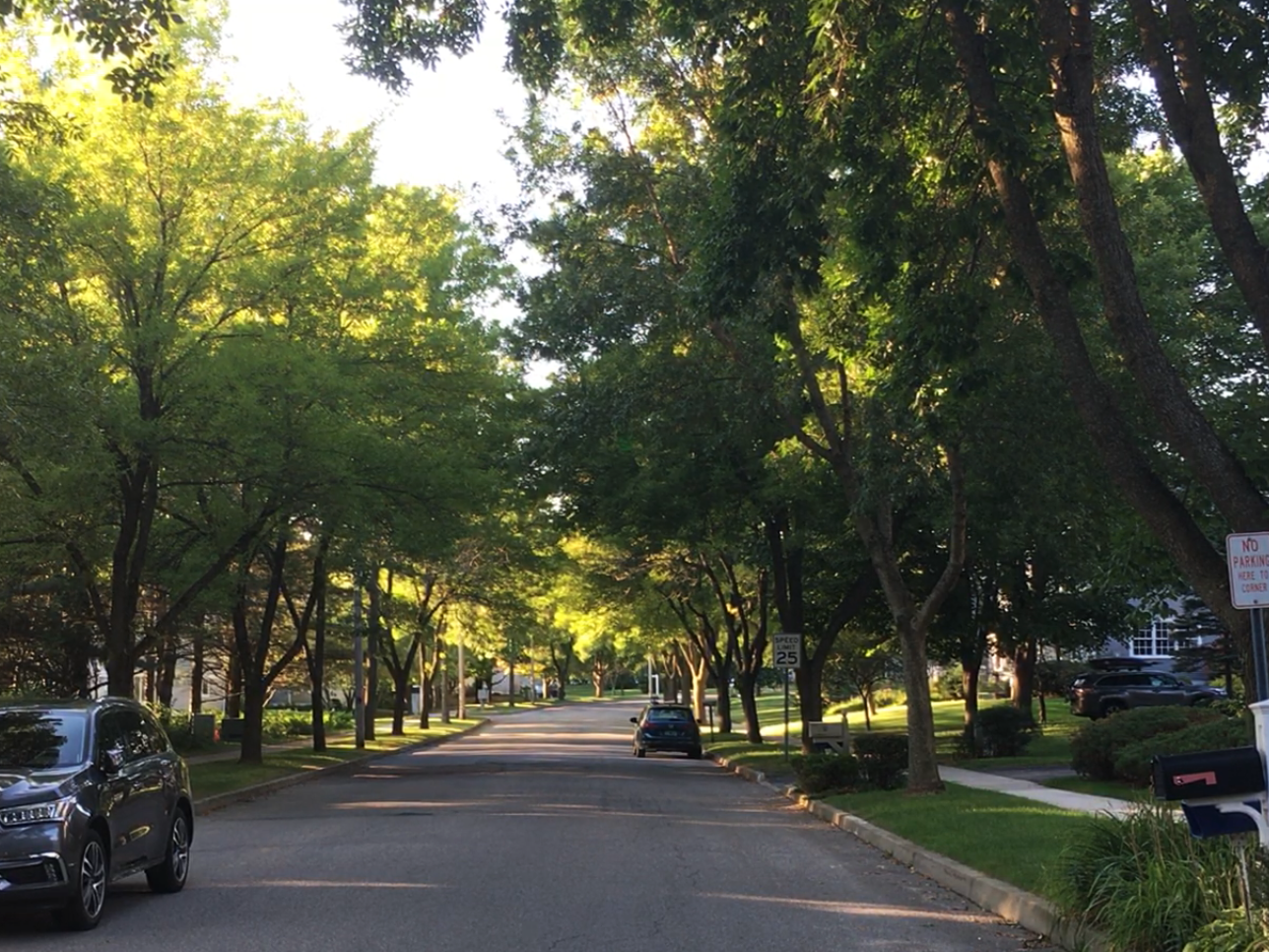 Ash trees line Cumberland Road in Burlington's New North End on Saturday, Sept. 15, 2018.