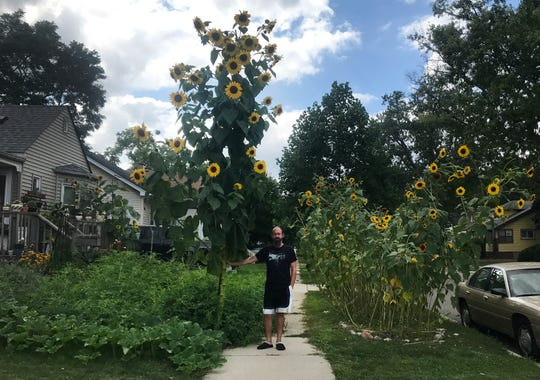 Michael Purdy of Ferndale next to his giant sunflower plant that grew in his front yard.