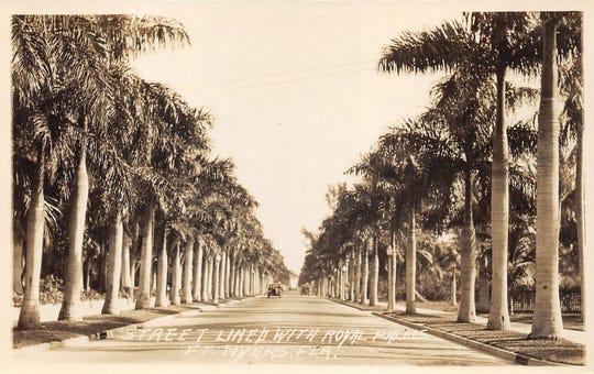 Historic royal palms