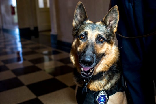 Jodi-Le, a German shepherd that works in search and rescue and locating cadavers, sits in at Hardin County Circuit Court with her partner William Branum, the Hardin County fire district 14 chief in Savannah, Tenn., on Monday, Sept. 17, 2018.