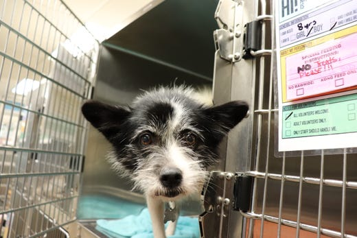 East Tn Shelters Take In Pets Offer Adoptions After Hurricane Florence