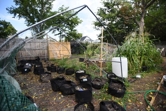 Remnants of an outdoor garden at a home on W. Michigan Avenue in Lansing.  Authorities seized the plants, ducks, chickens, and pit bull puppies Tuesday afternoon, Sept. 18, 2018.
