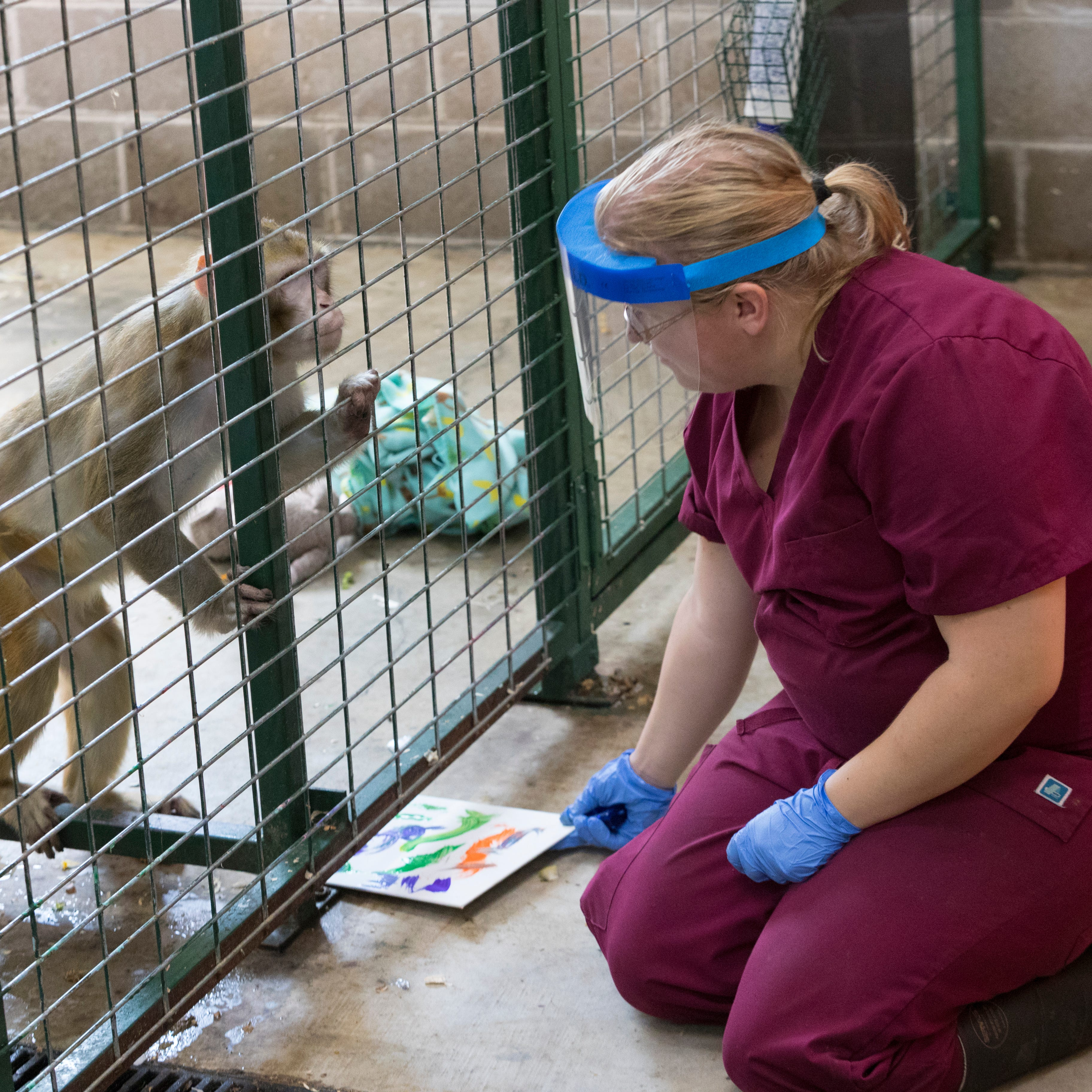 Monkey sanctuary in central Wisconsin is retirement home for primates used for medical research