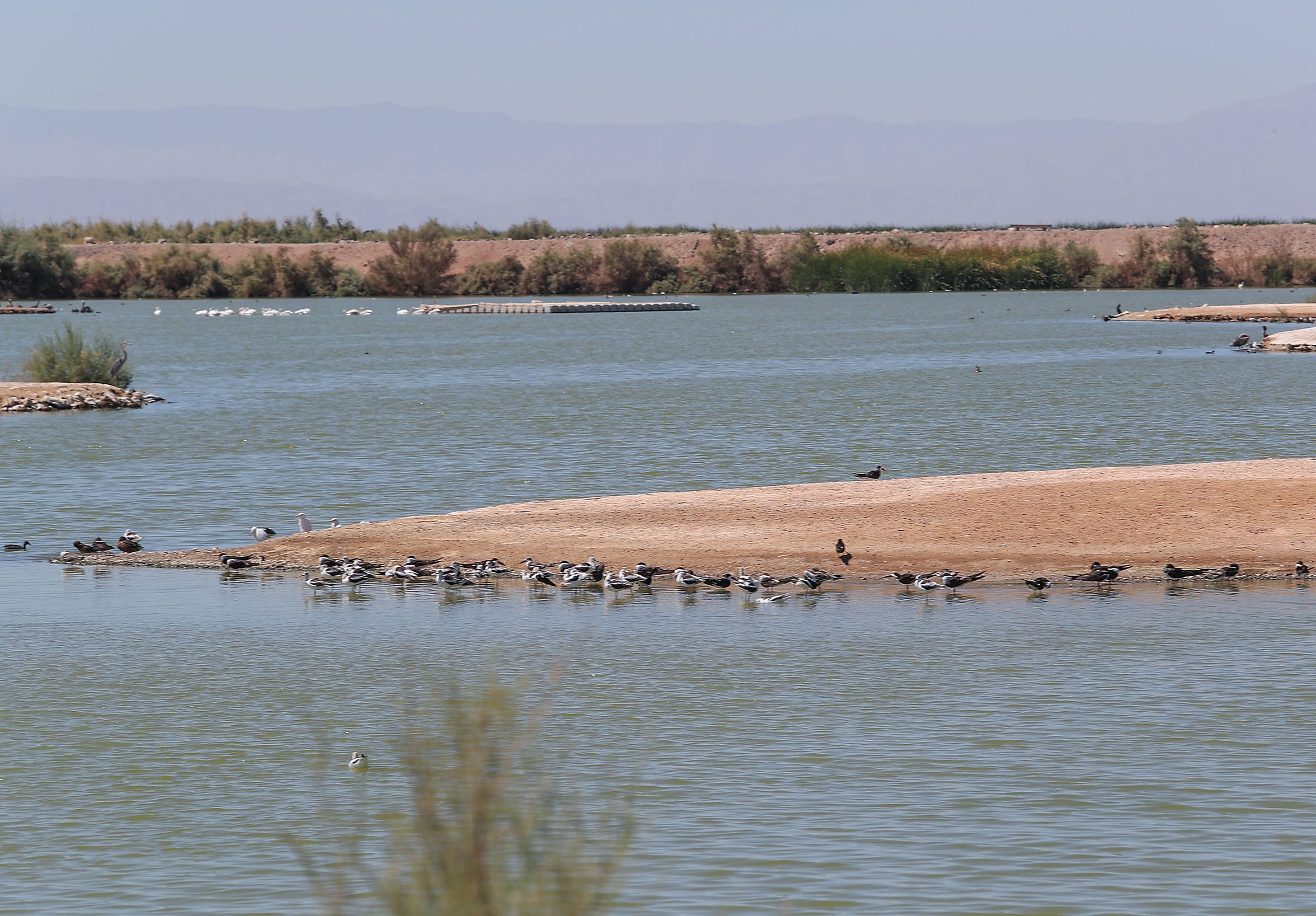 An existing wetlands habitat at the Sonny Bono Salton Sea National Wildlife Refuge, near the Red Hill Bay site, seen on Sept. 12, 2018.