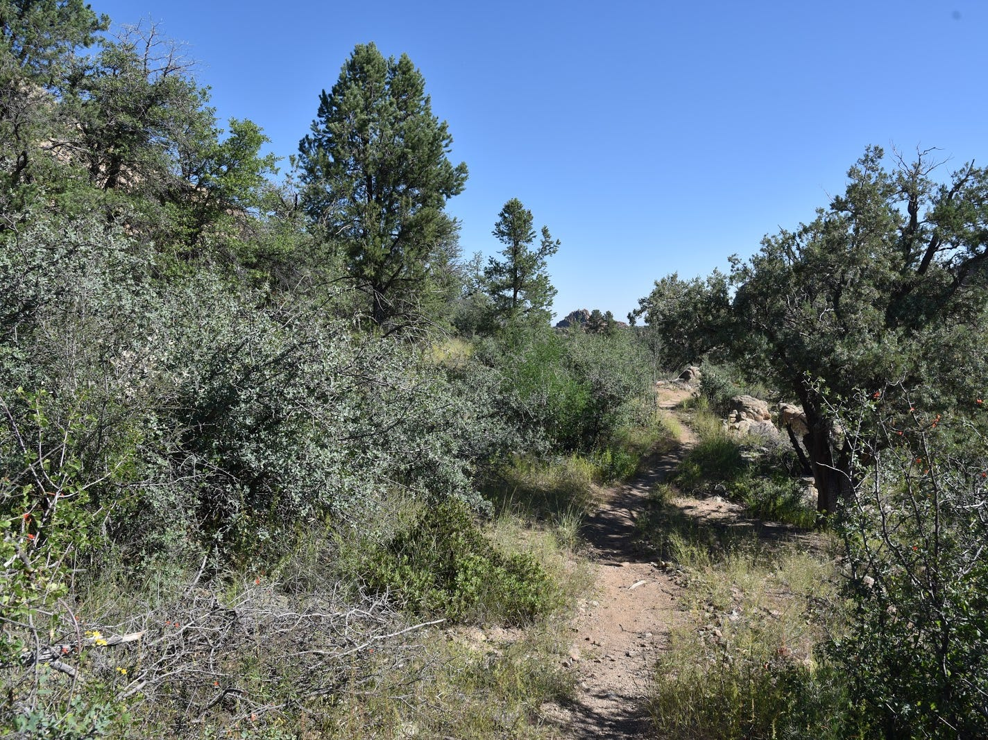 Some parts of the trails are covered in high-desert vegetation.