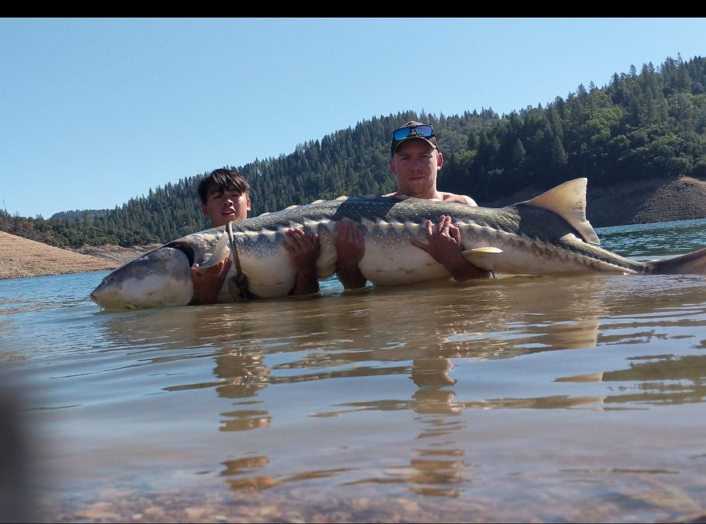 Sou Saephan, left, and Brandon Bartlett hold the 8-foot-long sturgeon they found floating in Lake Shasta on Monday morning, Sept. 17, 2018.