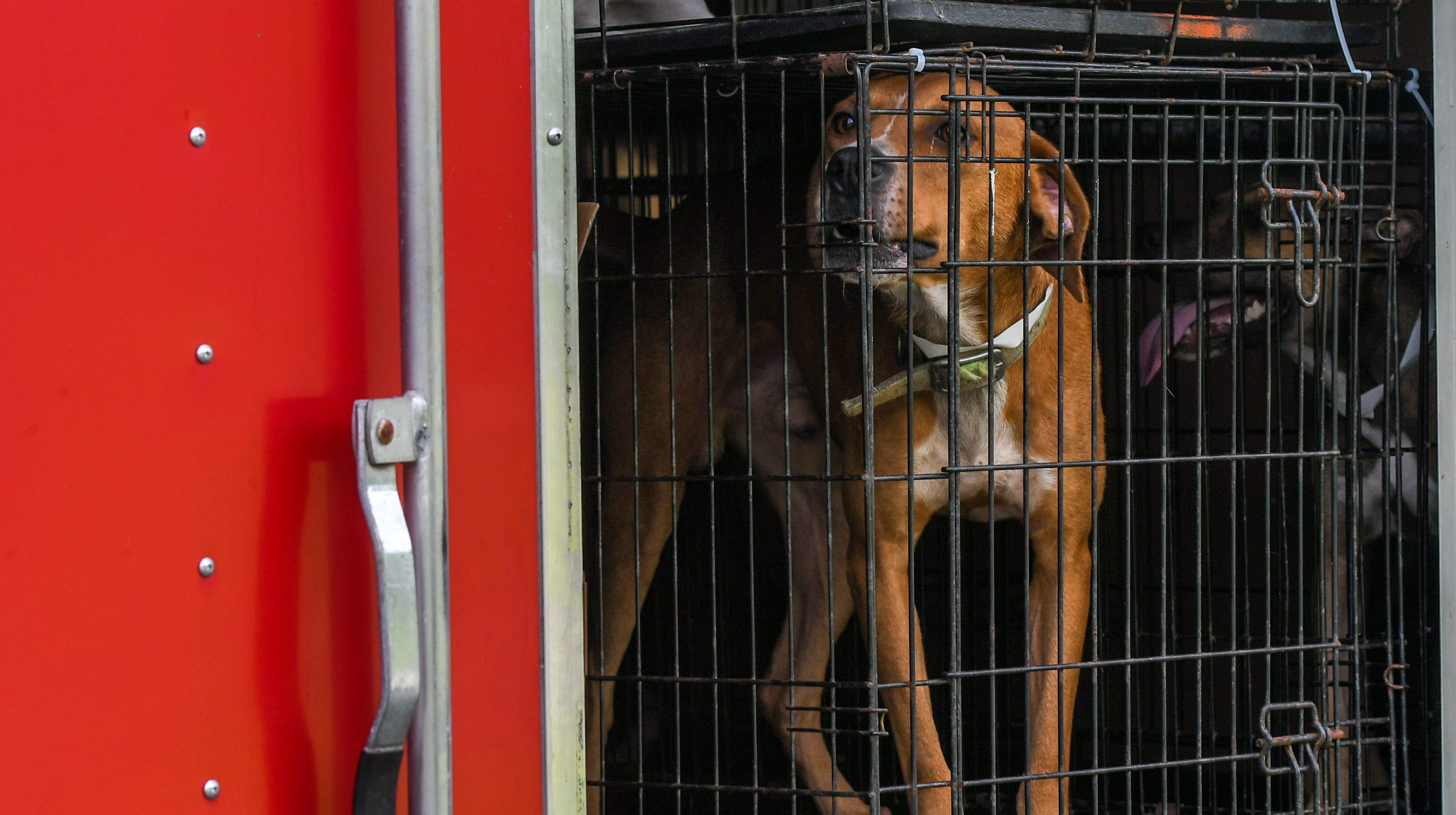 'We're looking at really saving these lives': Dogs displaced by Florence arrive in Delaware