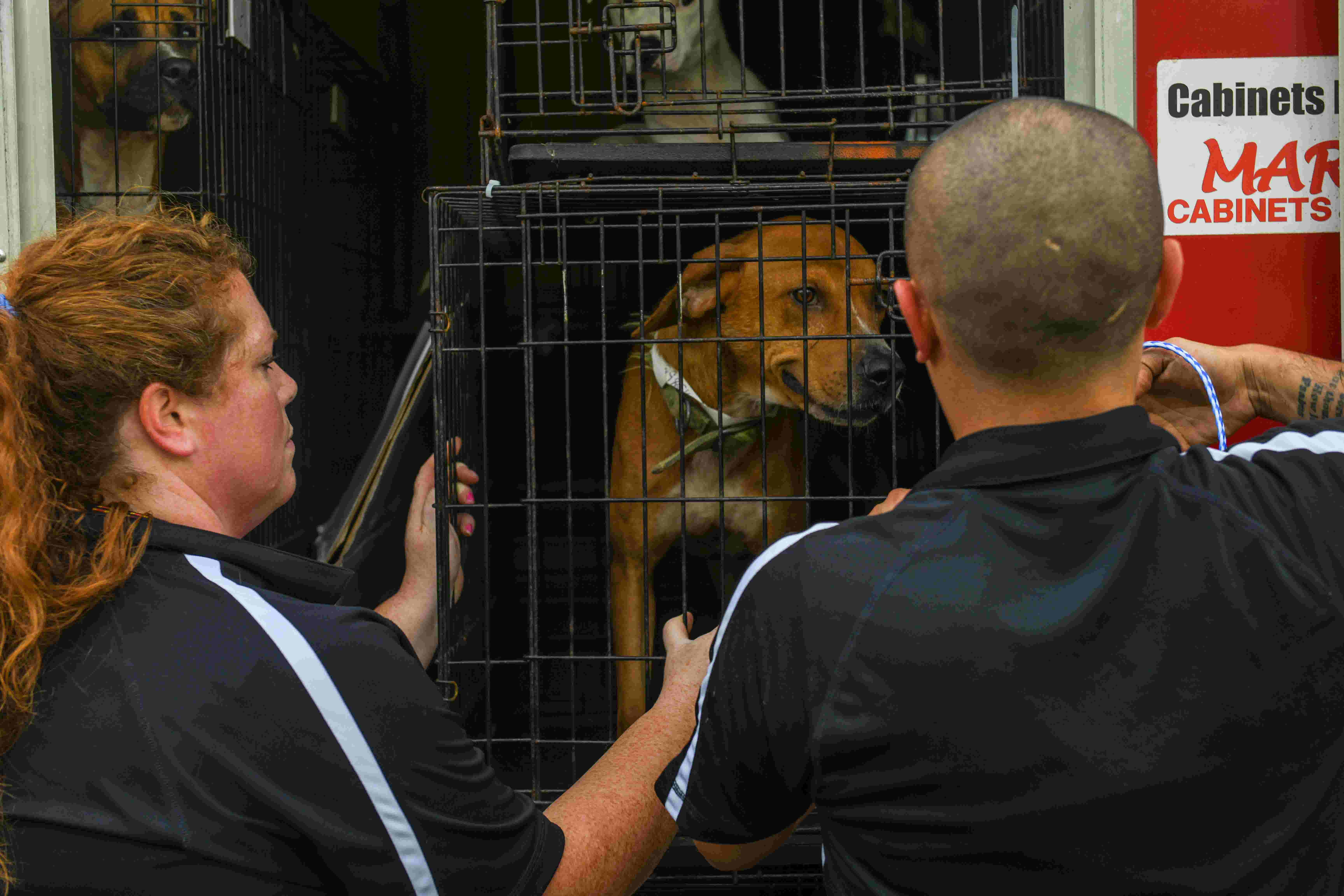 WATCH: Dogs displaced by Hurricane Florence arrive in Georgetown