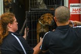 Dogs and cats displaced by Hurricane Florence in North Carolina arrived at the Brandywine Valley SPCA shelter in Georgetown on Tuesday, Sept 18, 2018.