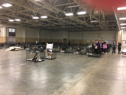 Shelter animals displaced by Hurricane Florence wait at a Cumberland County fairground in North Carolina for a team from the Brandywine Valley SPCA to relocate them to Georgetown, Delaware.