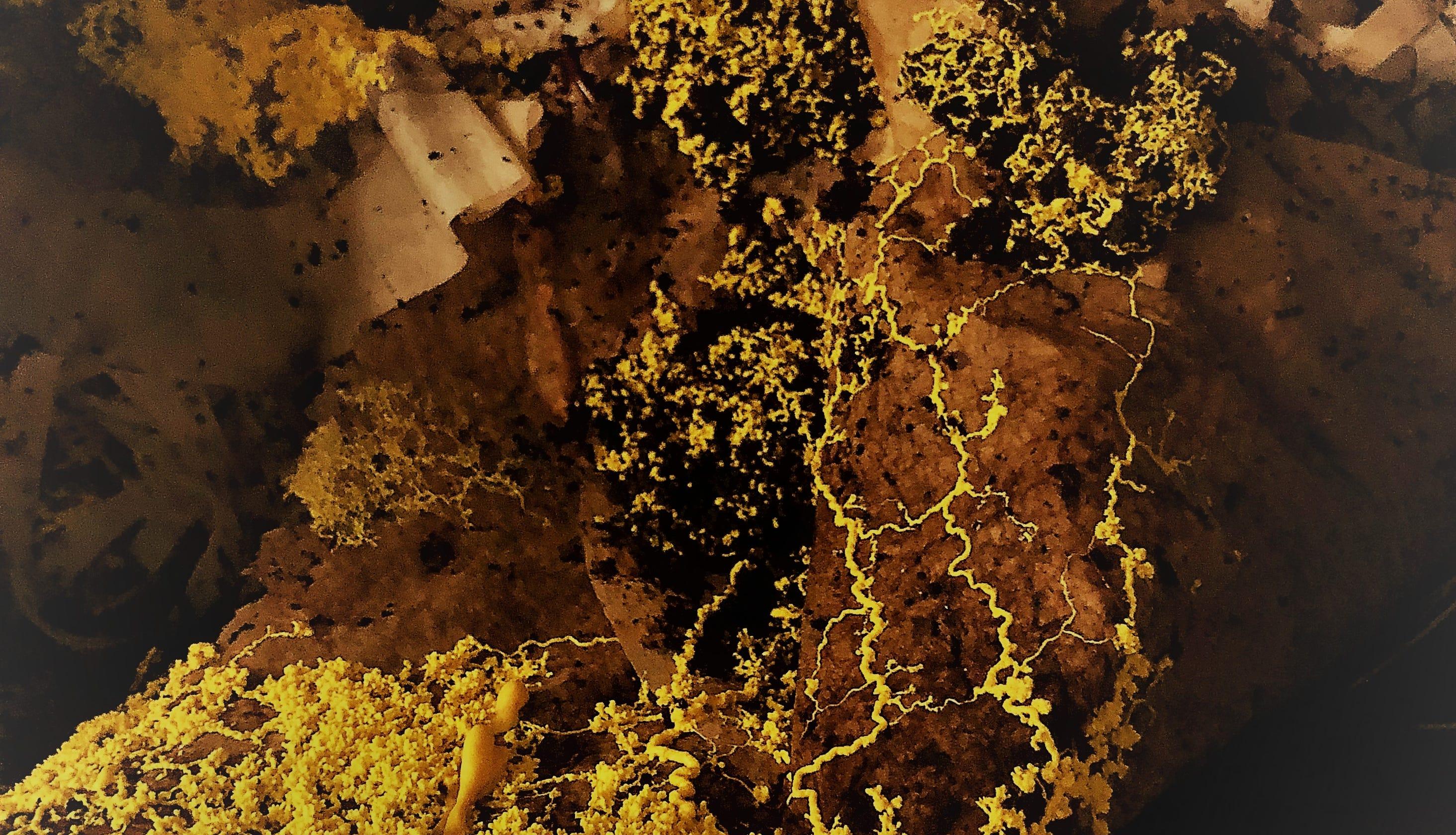 I ain\'t afraid of no slime mold