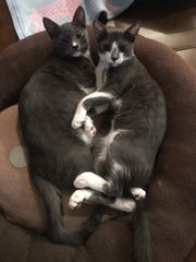 Princey and Jackson Smudge relax at home.