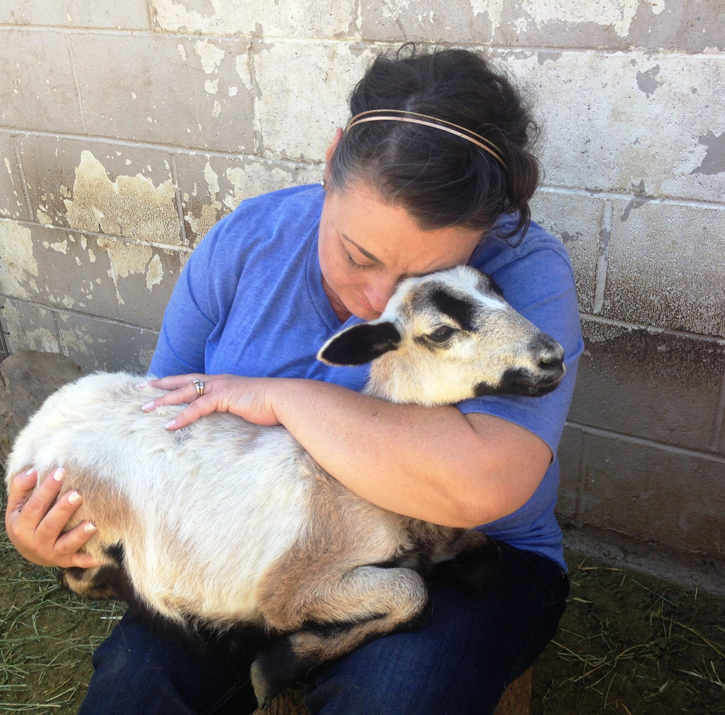 Who rescued whom? Sheep saved from slaughter are now therapy animals in Moorpark