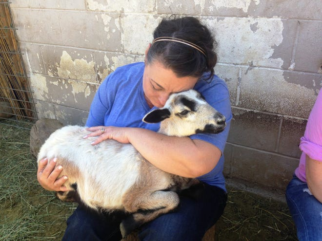 April McIlroy, whose son died a year ago, holds a lamb at The Sheep Heal Project in Moorpark, a nonprofit that rescued 26 American blackbelly sheep from slaughter. The sheep are now therapy animals.