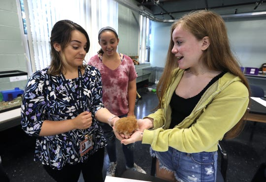 Teacher Alessandra Torello passes a hamster to Annmarie Lynch during an animal science class at Rockland BOCES in West Nyack Sept. 18, 2018. In center is Nicole Cangelosi.