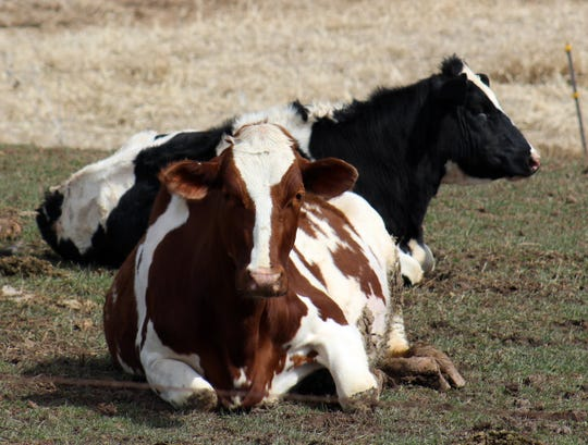 When selling heifers, timing is important.