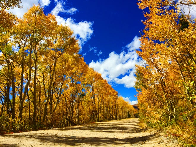 The aspen leaves are bright yellow in the Colorado high country near Ward, Colorado, on Sept. 23, 2016. This year, fall begins Saturday Sept. 22.