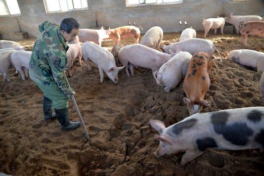 Ap China Swine Fever Outbreak I Chn
