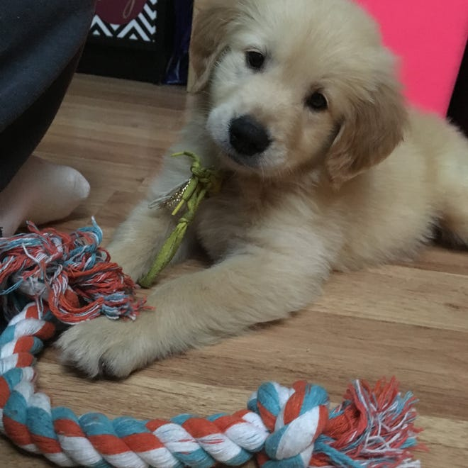 Cooper, a golden Labrador retriever puppy, was purchased using a complex pet financing agreement from a Middletown, New Jersey, pet store.