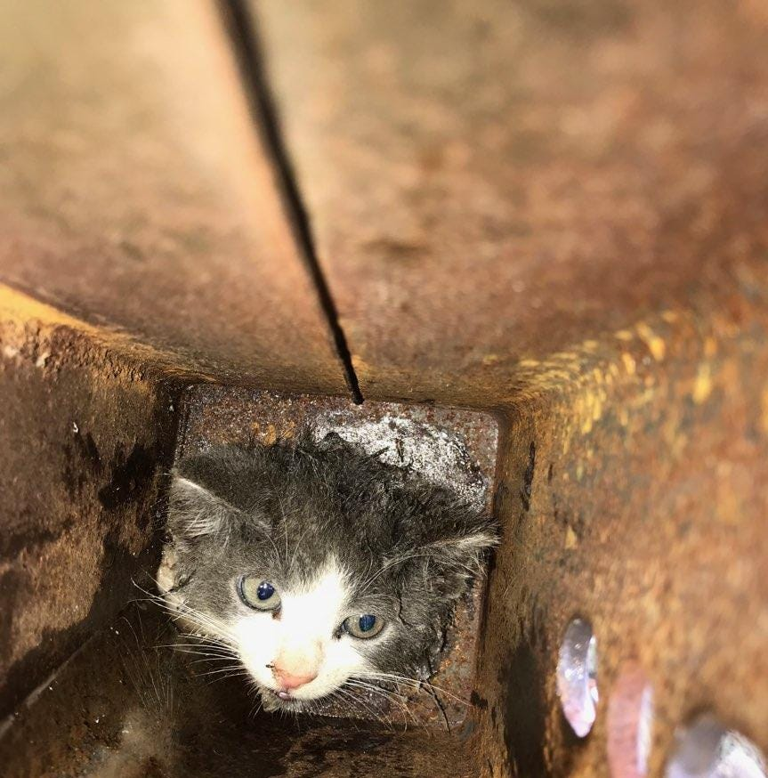 Cat stuck in pole rescued in Edison