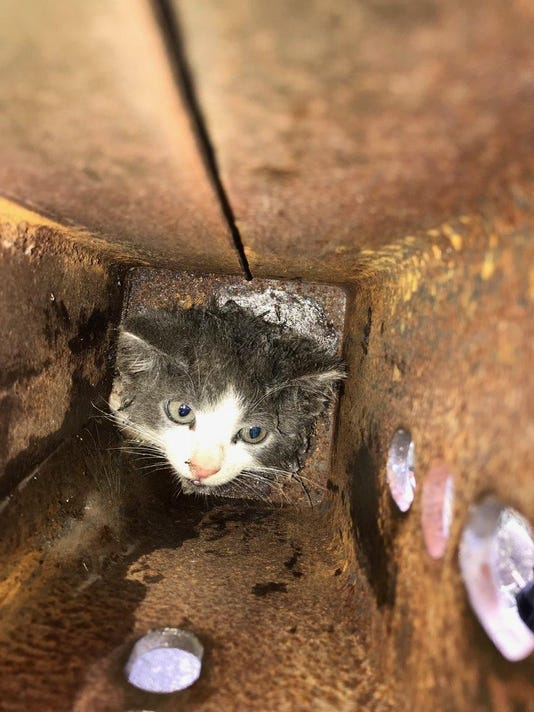 Cat Inside Pipe In Edison