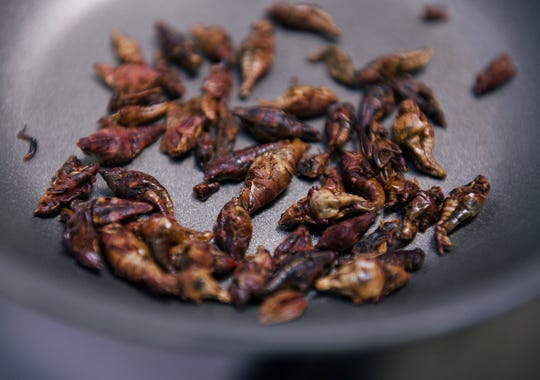 A pan of dried and roasted grasshoppers.
