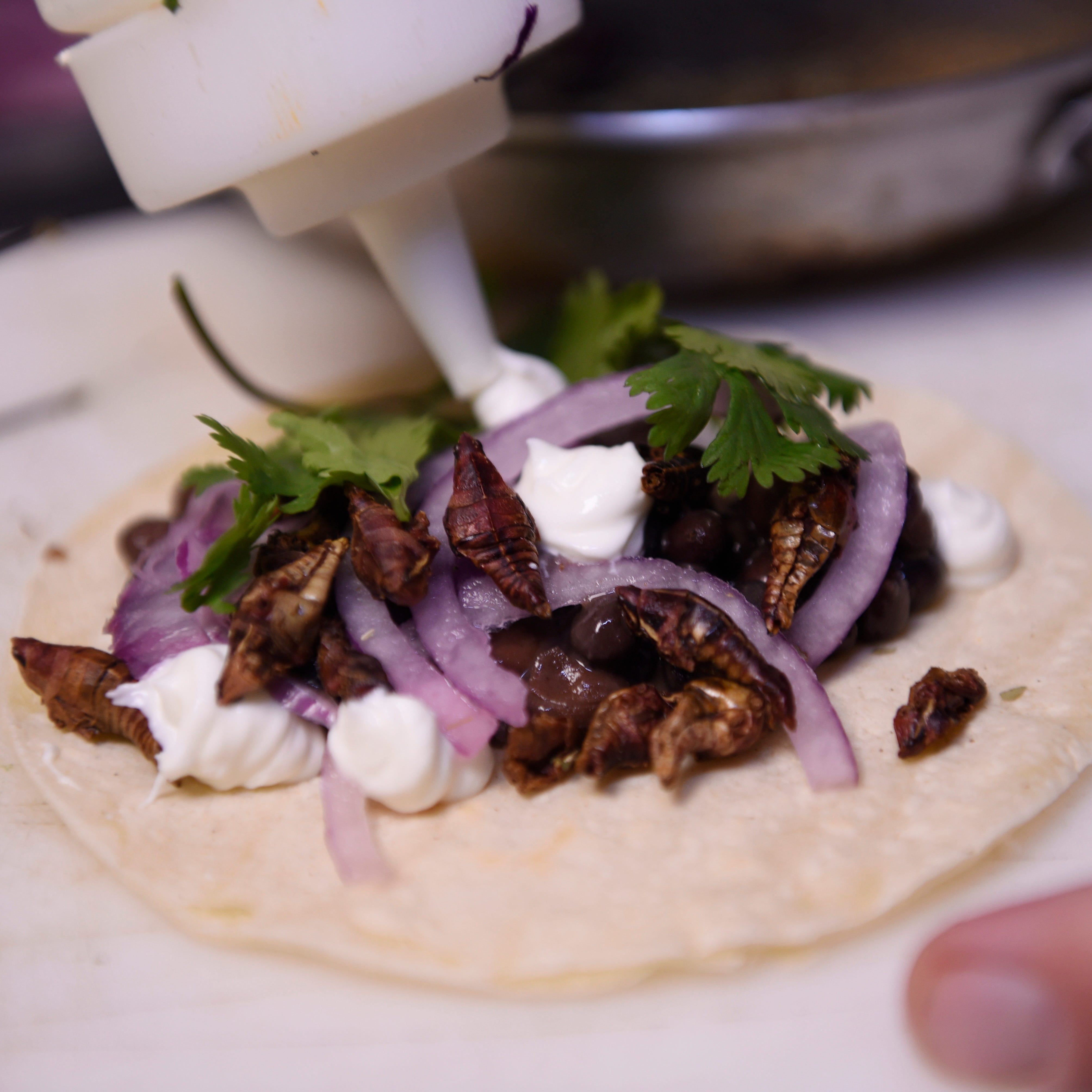 Chef Drakopoulous squeeze out house made sour cream on a roasted grasshoppers taco with wild mushrooms, black beans and cilantro.