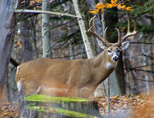 New York hunters shot more white-tailed deer in 2018 than the previous year, according to final harvest figures.