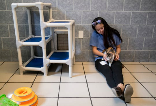 Volunteer Keitlyn Ho plays with one of the kittens at the Gulf Coast Humane Society on Wednesday, Sept.  19, 2018, in Fort Myers.