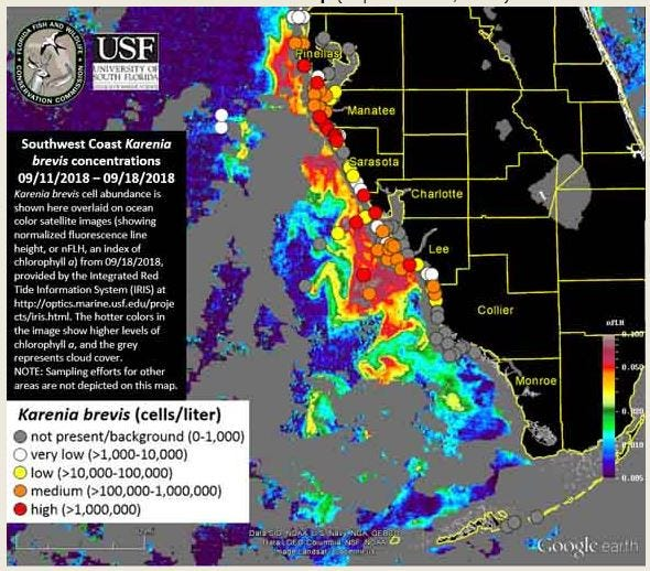 A Florida Fish and Wildlife Conservation Commission report shows background to high counts along the Southwest Florida coast.