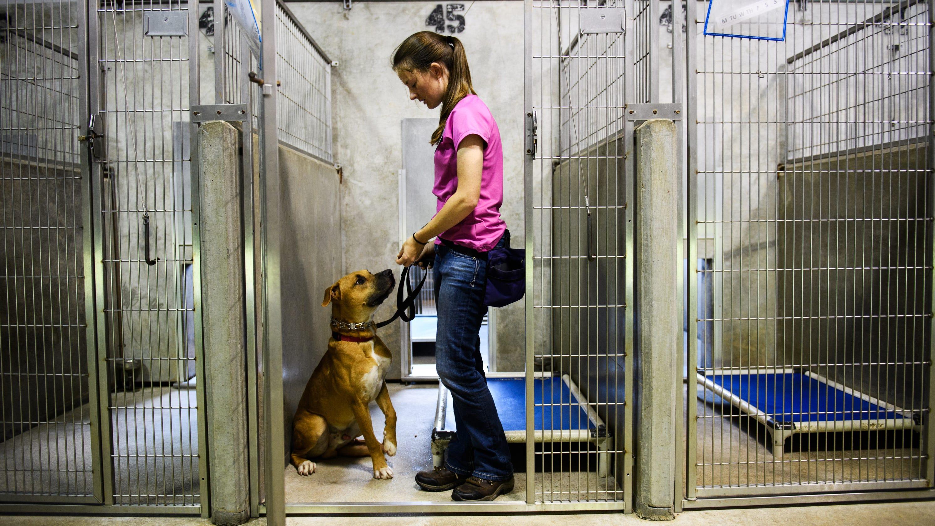 Greenville County animal shelter handles sudden summer