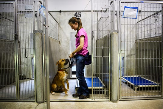 Rachel Neese, a volunteer at Greenville County Animal Care, works with a dog on Wednesday, Sept. 19, 2018.