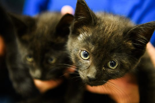 2018 file photo of kittens at Greenville County Animal Care. Petco gave Greenville County Animal Care a $100,000 Valentine.