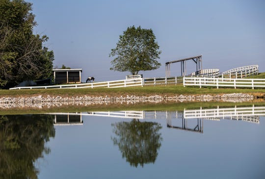 A horse grazes atop a hill near a lake at Joe Huber's Farm Wednesday morning.