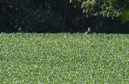 A trooper from the Ohio Highway Patrol searches a field near Woodville Road on Wednesday for fugitive Shawn Christy.