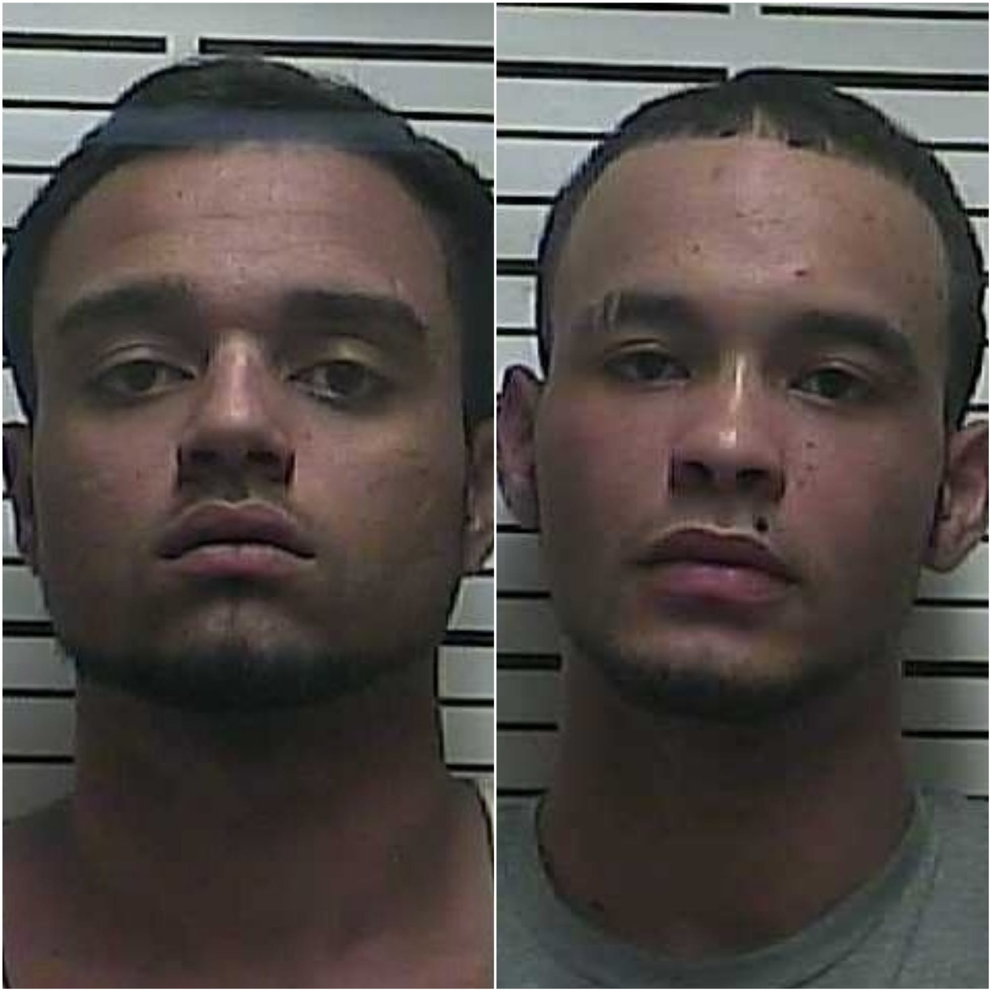 Arrestees mistake hemp for marijuana in Weakley County theft bust