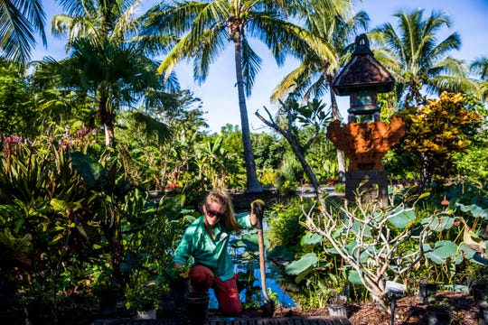Mary Helen Reuter, curator of education, works on planting new plants as a part of annual maintenance at the Naples Botanical Garden on Wednesday, Sept. 19, 2018. The gardens will be reopening on Oct. 1.